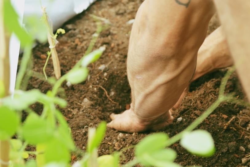 diggingsoil2
